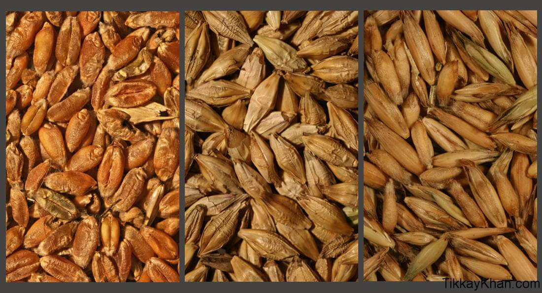 Grains (Wheat, Barley, Oats)