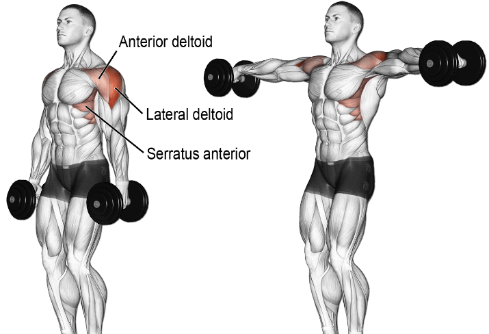 Lateral Hand Weights