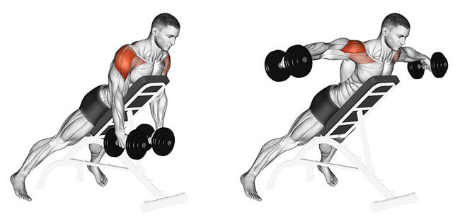 Dumbbells Seated Bent