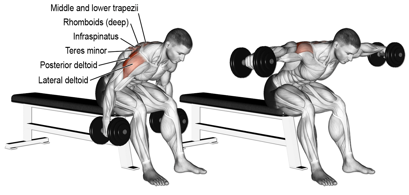 Incline Bench-Seated Bent