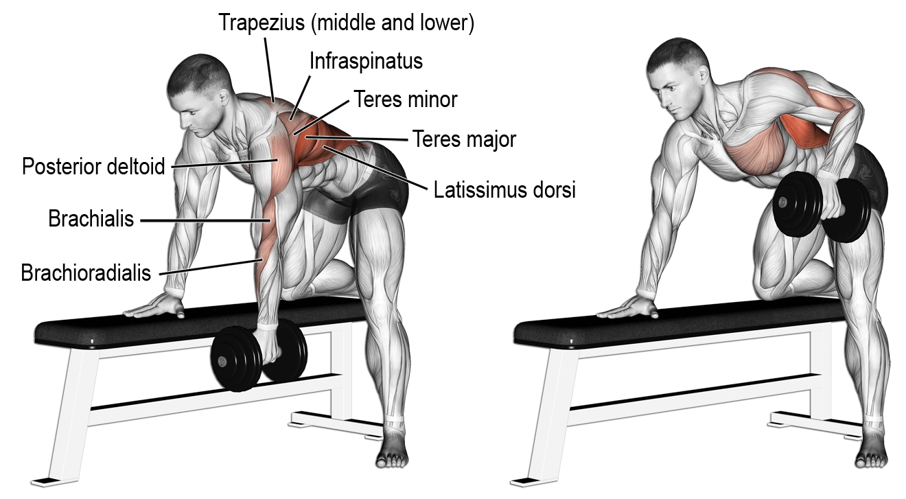 One Arm Dumbbell Standing Bent