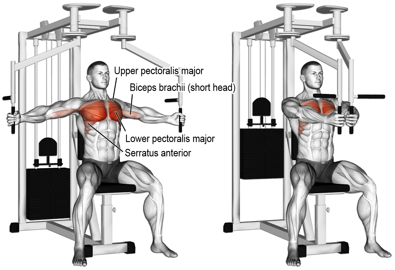 Pec Deck Machine Seated Reserved