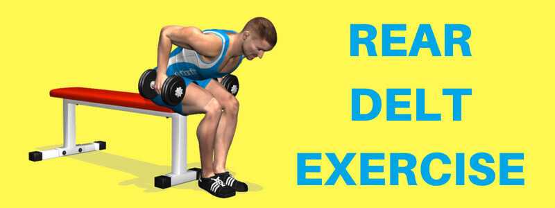 Rear Delt Exercises: How You Can Perform These Exercises Accurately?