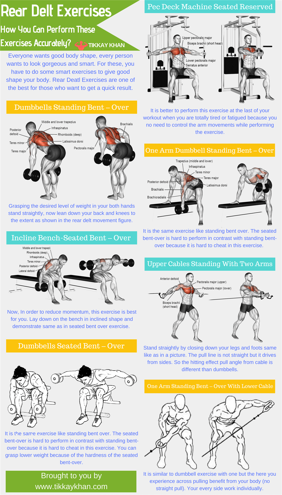 Rear Delt Exercises
