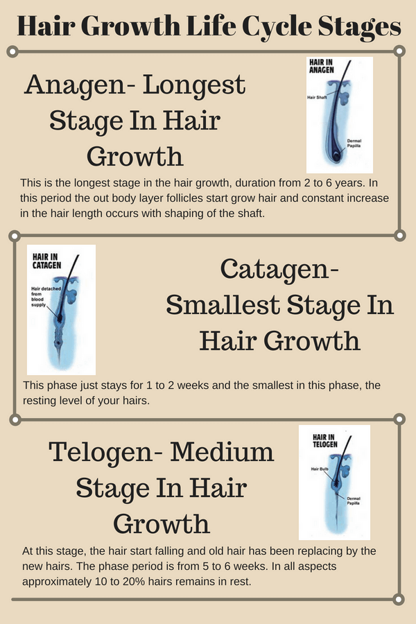 Hair growth life cycle